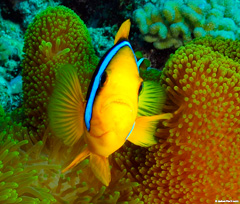 See the best fish and coral reefs in Fiji with Tavenui Ocean Sports.