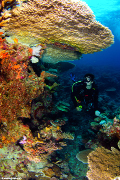 Extravagant soft corals and reef fish bring divers from around the world to Fiji's Rainbow Reef.